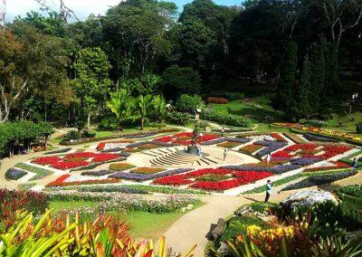 doitung-garden