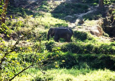 elefant-chiangmai